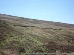 A row of grouse butts near Brownsey Moor