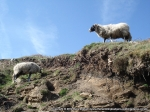 Sheep grazing above us