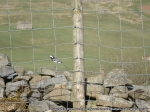 A wagtail singing away as we watched