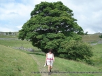 30/7/11 Following the footpath back towards Kilnsey after reaching the trig on Kilnsey Moor